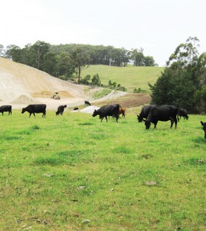 Photo of cows grazing at Prosper Valley